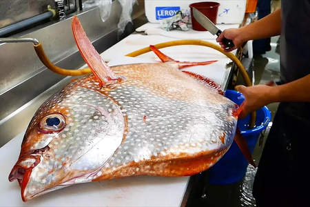 Japanese Fishmongers Prepare Giant Opah (Moonfish)