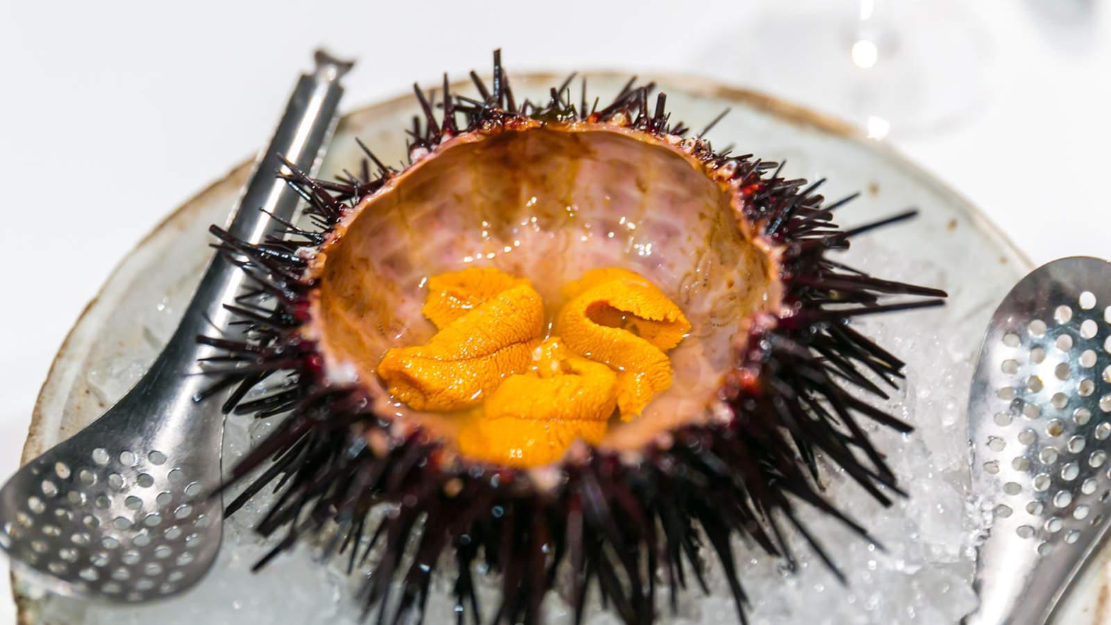 Uni, ウニ (Sea Urchin)