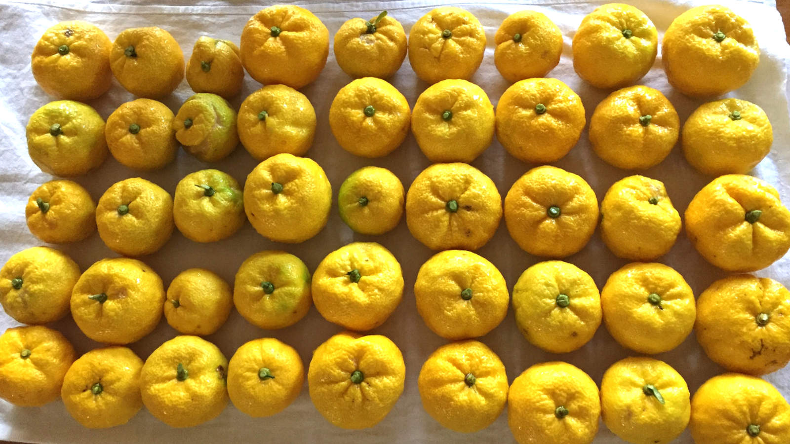 Yuzu, ユズ (Japanese Lemon)
